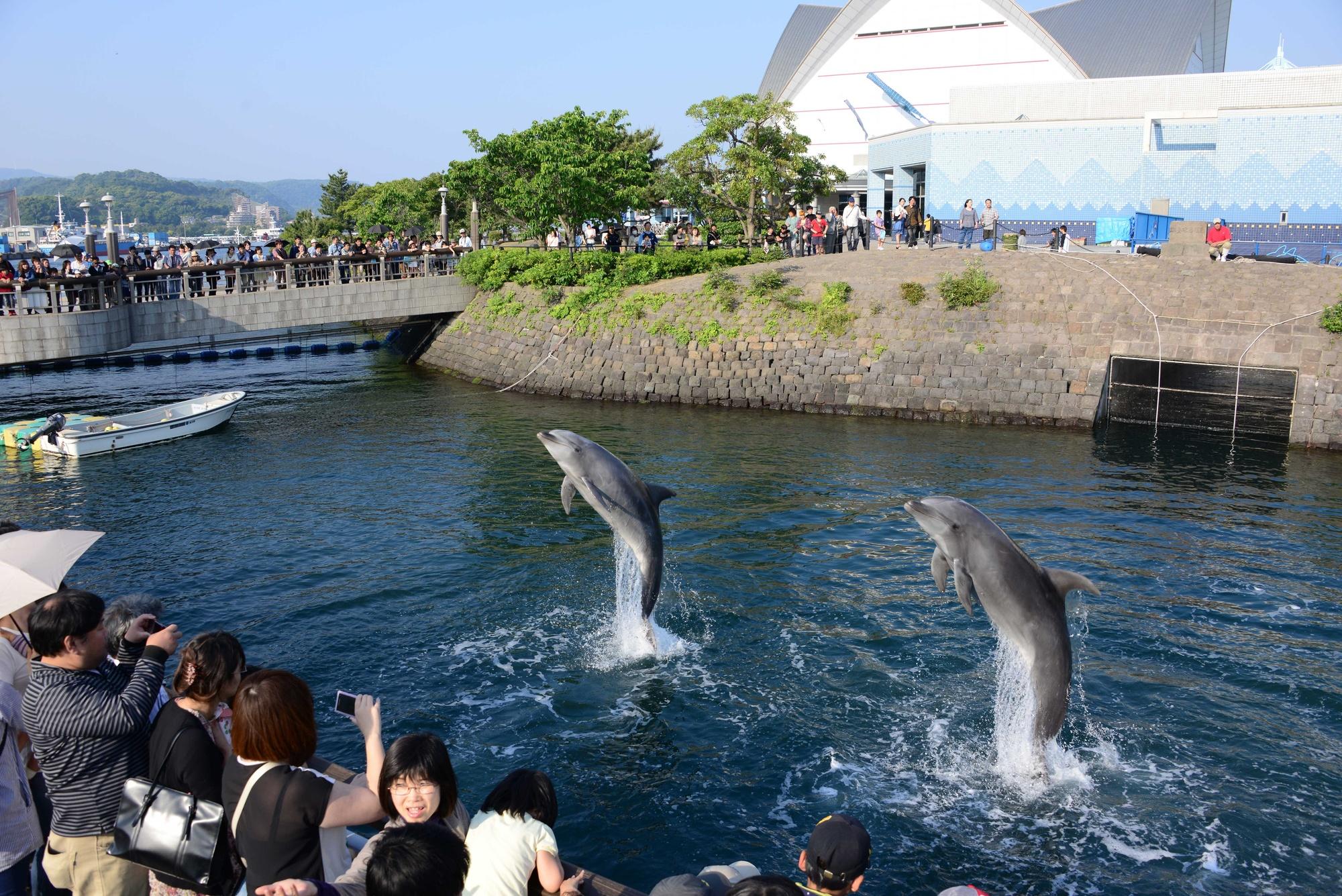 かごしま水族館「いおワールド」5